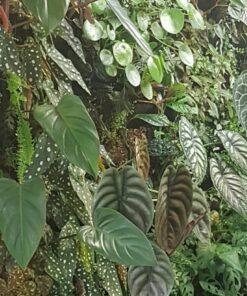 Binnenplanten